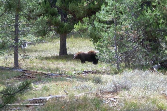 bear1-1
