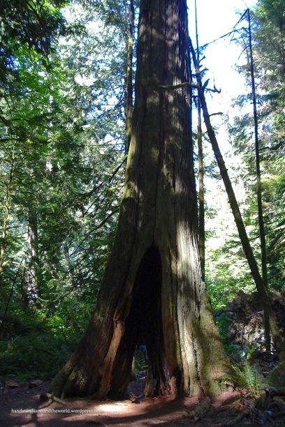 Cathedral Grove - MacMillon Provincial Park, BC