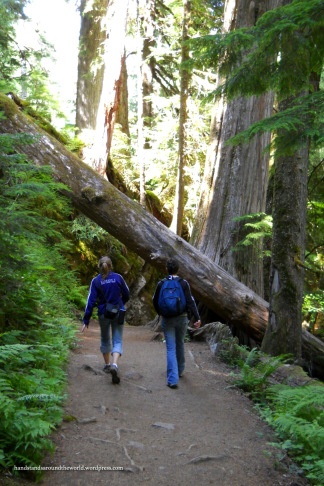 Hiking in Grove of the Patriarchs - Mount Rainier National Park, WA (Photo credit: Mom)