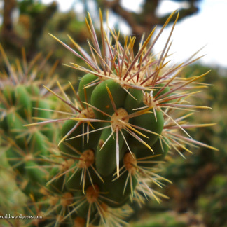 Cactus - Guadalupe Mountains National Park, TX