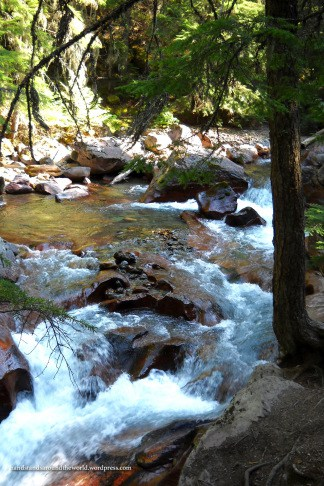 Avalanche Creek - Glacier National Park, MT