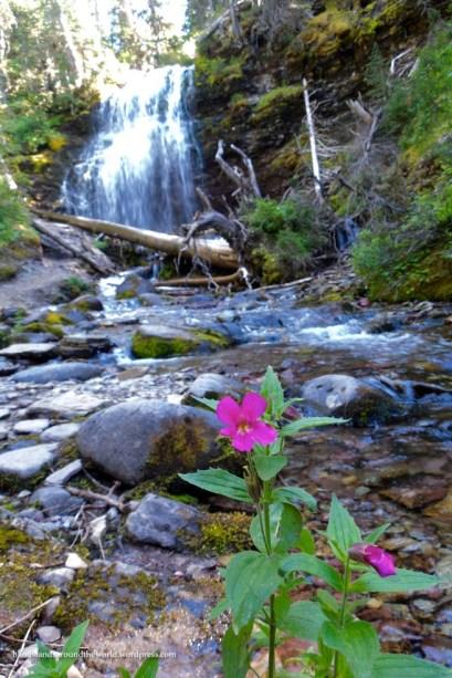 Monkey flower at Forum Falls - Akamina-Kishenina Provincial Park, BC